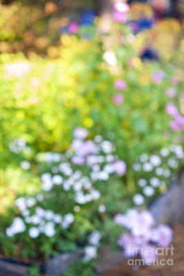 Abstract Photograph - Flower Garden In Sunshine by Elena Elisseeva