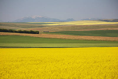 Flowering Canola Fields Mixed With Print by Michael Interisano