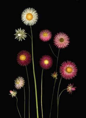 Flowers Print by Deddeda