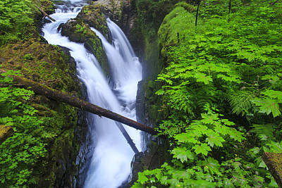 Forest And Stream In The Olympic Forest Print by Gavriel Jecan