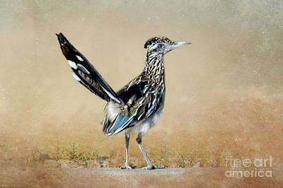 Roadrunner Photograph - Greater Roadrunner by Betty LaRue