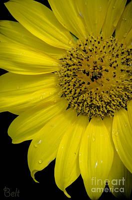 Artist Christine Belt Photograph - Hello Sunshine by Christine Belt