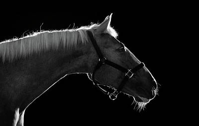 White Horses Photograph - Horse by Arman Zhenikeyev - professional photographer from Kazakhstan