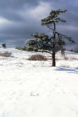 Iced Tree Shenandoah National Park Print by Thomas R Fletcher