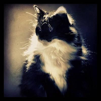 Cats Photograph - In A Daze by Mandy Shupp