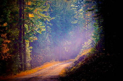 Into The Light Print by Donna Duckworth