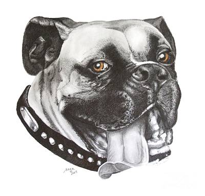 Boxer Dog Art Drawing - Jed by Marianne NANA Betts