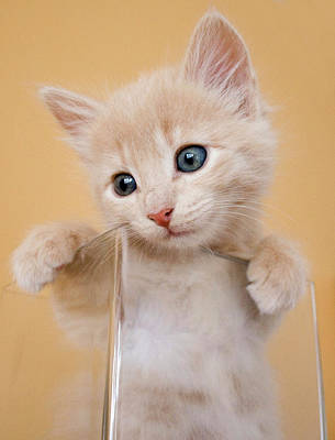 Colored Background Photograph - Kitten In Glass Vase by Sanna Pudas