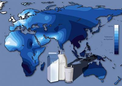 Lactose Tolerance, Eurasia And Africa Print by Art For Science