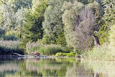 Odon Photograph - Lake Reflections by Odon Czintos