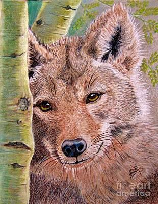 Southwest Drawing - Lobo by Marilyn Smith