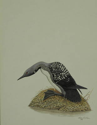Loon Mixed Media - Loon by Alan Suliber