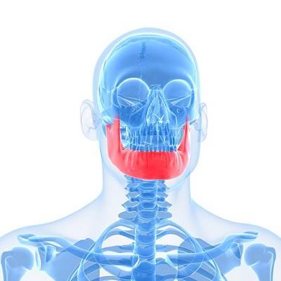 X-ray Image Digital Art - Lower Jaw Bone, Artwork by Sciepro