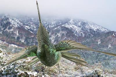 Magnificent Hummingbird - Eugenes Fulgens Photograph - Magnificent Hummingbird  by Gregory Scott