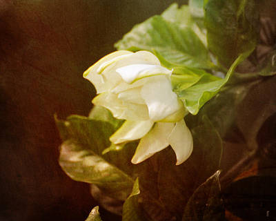 Antique Photograph - Magnolia II by Jai Johnson