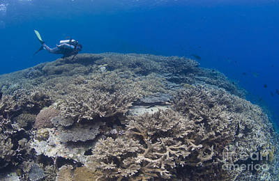 Fused Photograph - Masses Of Staghorn Coral, Papua New by Steve Jones