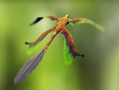 Microraptor Photograph - Microraptor Dinosaur Flying, Artwork by Christian Darkin