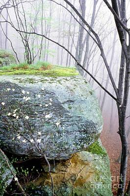 Dogwood Lake Photograph - Misty Spring Morning by Thomas R Fletcher