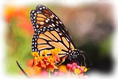 Monarch And Milkweed Print by Heidi Smith