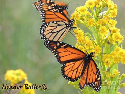 Laurence Van Oliver Digital Art - Monarch Butterfly by Laurence Oliver
