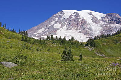 Mount Rainier Meadow Print by Sean Griffin