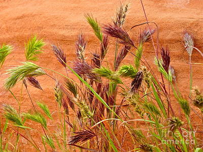 Nature Photograph - Nevada Desert Foxtails by Sean Griffin