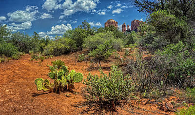 Brown White Sedona Trees Photograph - Oak Creek Trail by Stephen Campbell