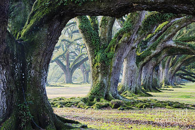 Old Growth Trees Print by Jeremy Woodhouse