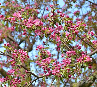 Pink Blossoms Print by Kathleen Struckle