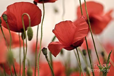 Poppy Flowers 04 Print by Nailia Schwarz