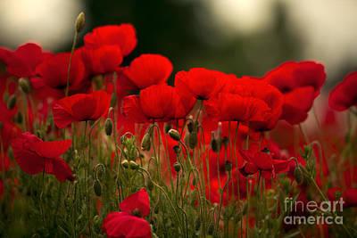 Poppy Flowers 05 Print by Nailia Schwarz