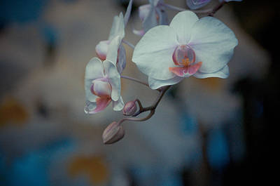 Pink Photograph - Pretty Pastels by Trish Tritz