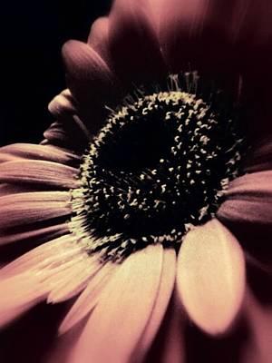 Purple Flowers Digital Art - Purple Beauty by Cathie Tyler