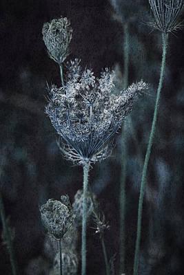 Queen Anne's Lace Print by Bonnie Bruno