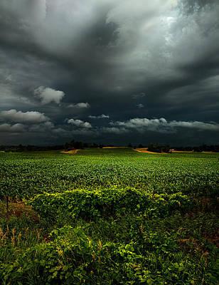 Evens Photograph - Rain by Phil Koch