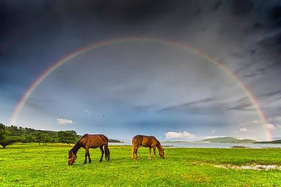 Rain Photograph - Rainbow Horses by Evgeni Dinev