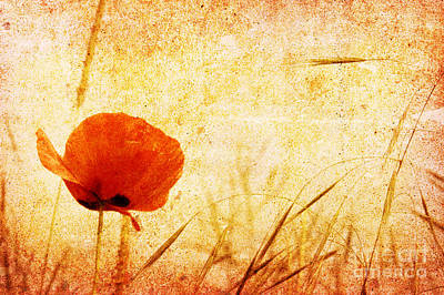 Red Poppy Original by Christophe ROLLAND