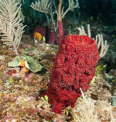 Red Sponge Print by Jean Noren