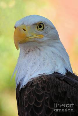 Regal Eagle Print by Linda Eshom