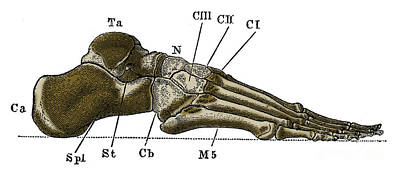 Right Foot Print by Science Source