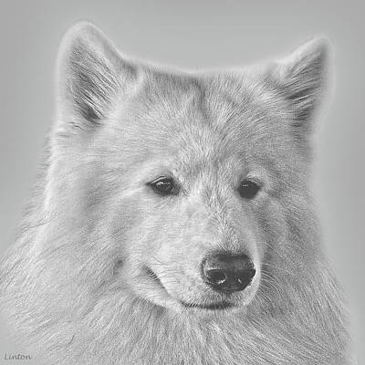 Breed Digital Art - Samoyed by Larry Linton