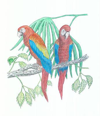 Macaw Drawing - Scarlet Macaw by Richard Freshour