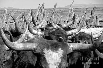 Cowboy Photograph - Sea Of Horns by Megan Chambers
