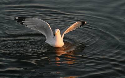 Seagulls At Sunset Print by Valia Bradshaw