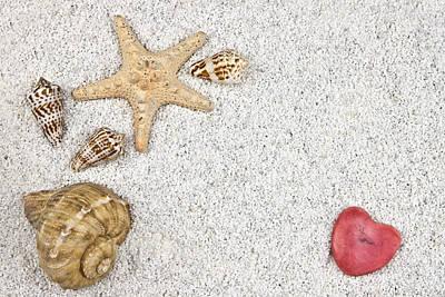 Seastar And Shells Print by Joana Kruse