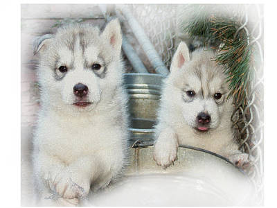 Puppy Digital Art - Siberian Husky Puppies by Jean Gugliuzza