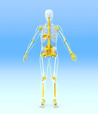 Skeleton And Ligaments, Artwork Print by Roger Harris