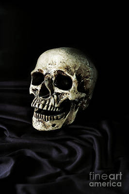 Skull Photograph - Skull by HD Connelly
