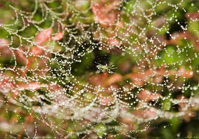 Photograph - Spider Under Dew by Stephen EIS