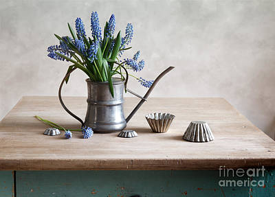 Still Life With Grape Hyacinths Print by Nailia Schwarz